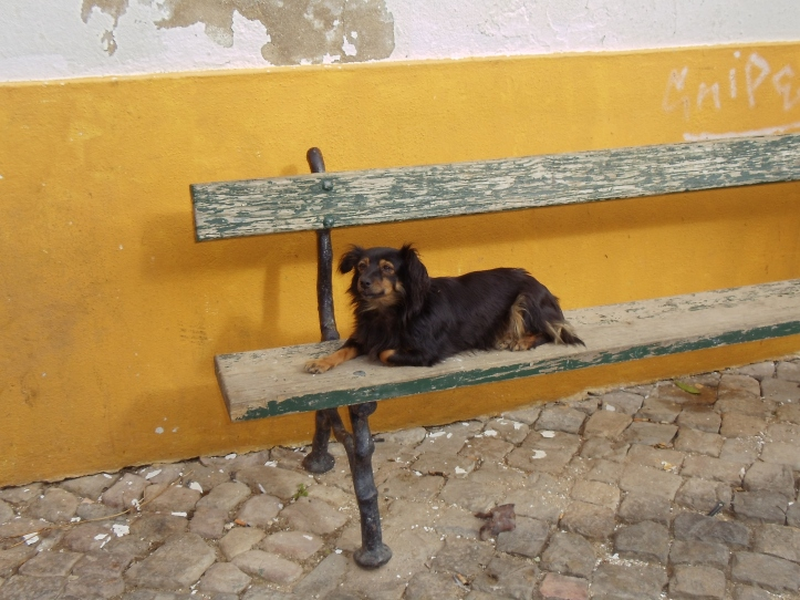 puppy on a bench