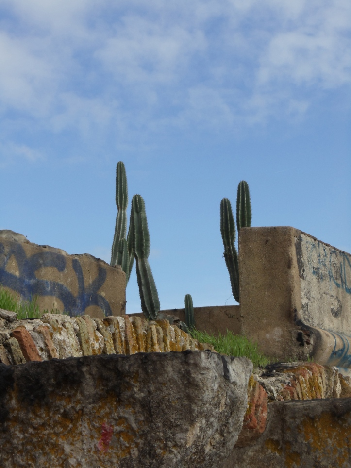 cactus fortifications