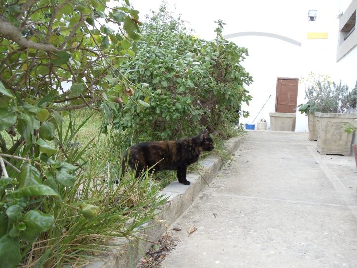 cat in courtyard