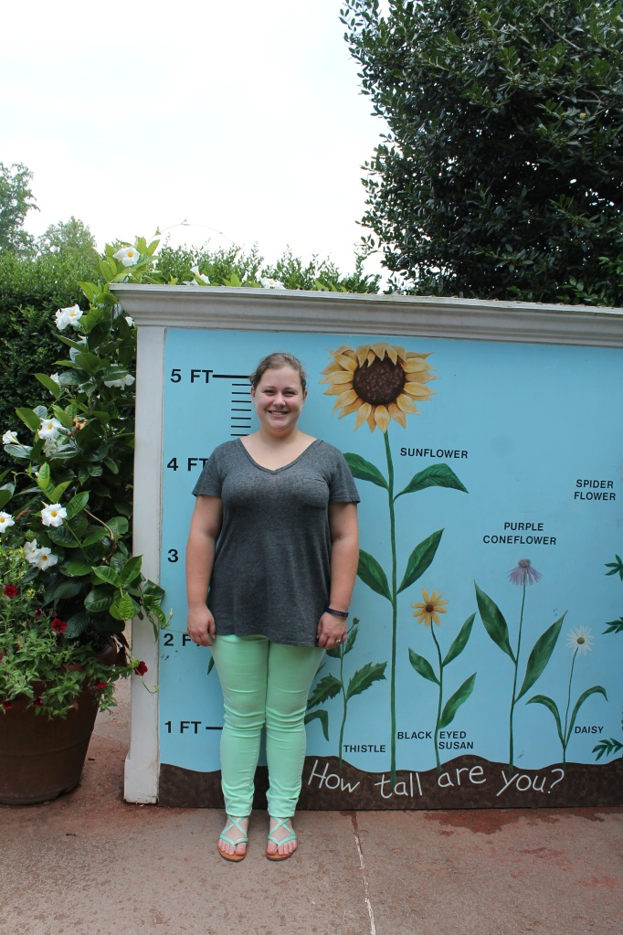 ginger is as tall as a sunflower
