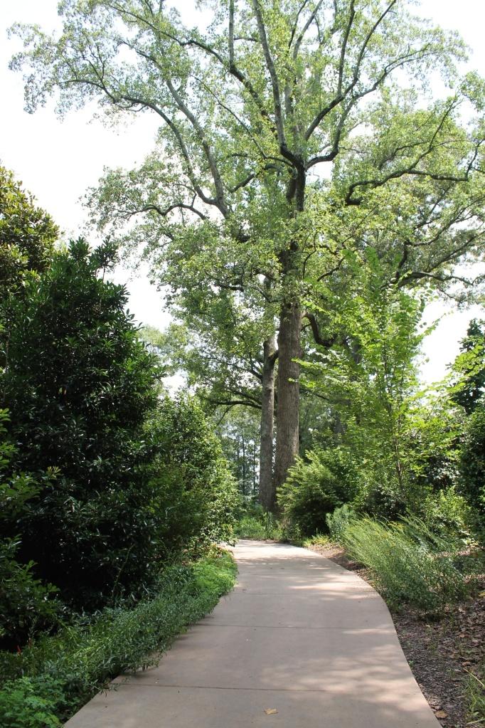 storza woods