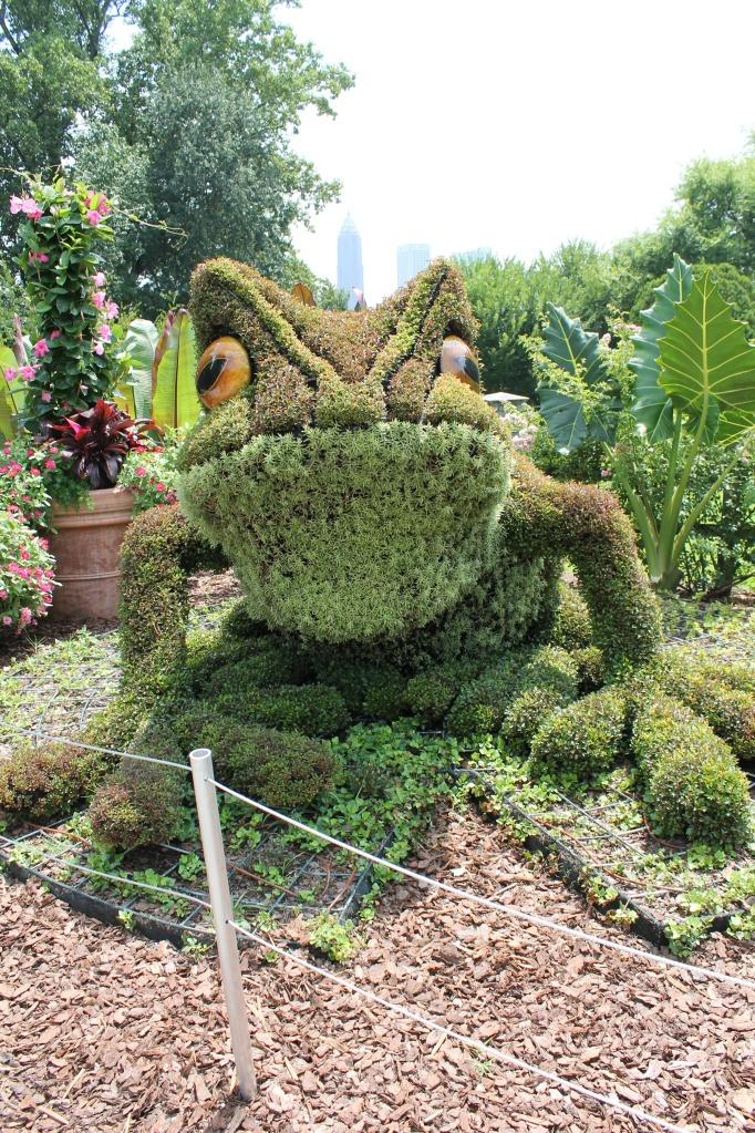 frog plant giants