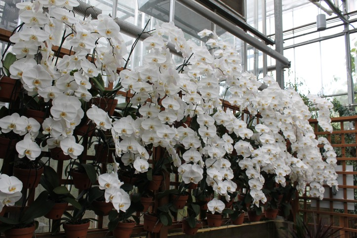 wall of white orchids